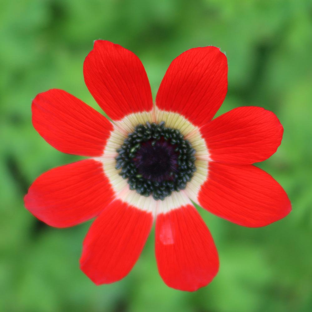 Blüte | Monika Cyrani | Foto: Mike Kauschke
