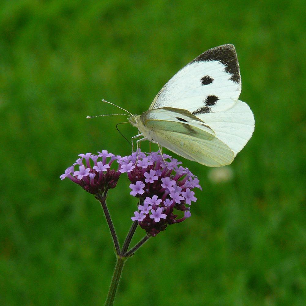 Schmetterling | Monika Cyrani | Foto: Mike Kauschke